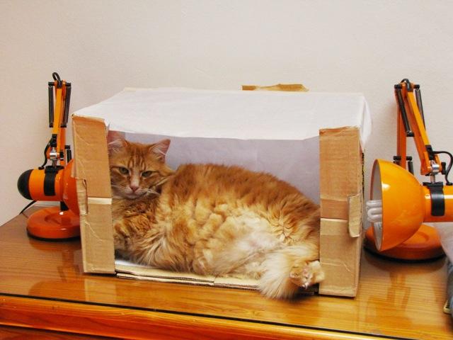 Lightbox Charlie