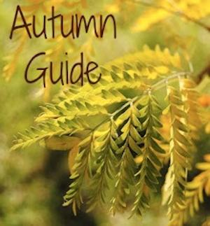 Autumn Guide