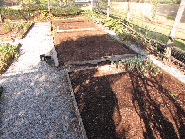 Autumn Veggie Beds