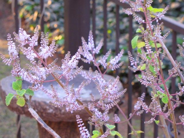 Garden 076