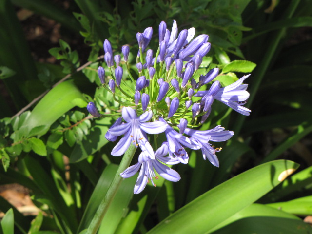 Garden 163