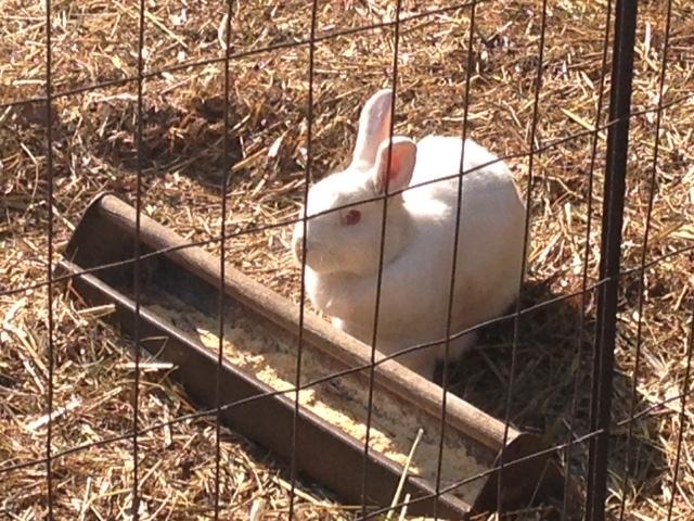 Stephanie Rabbit