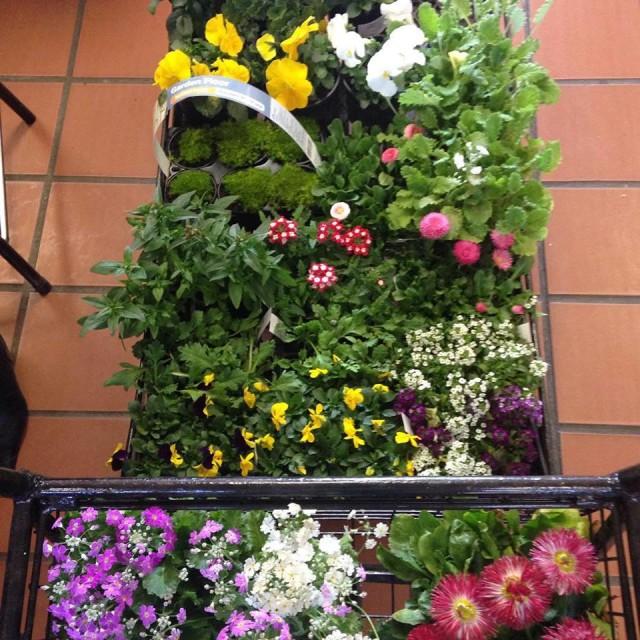 Gardening12